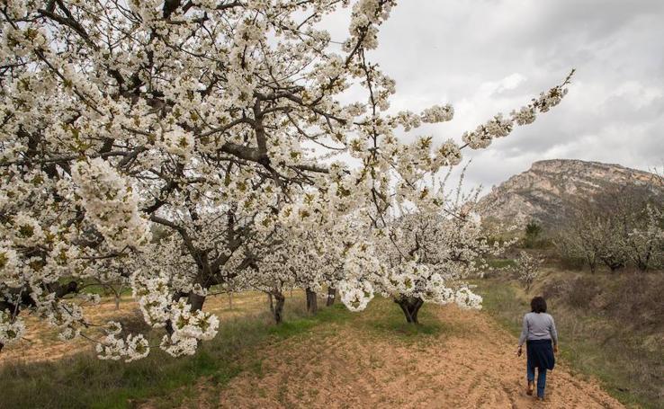 Floración de Las Caderechas