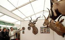 Almazán acoge desde esta tarde hasta el domingo la Feria Venatoria 'Venalmazán'