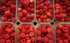 Una jornada técnica abordará en Zamora el cultivo de los pequeños frutos