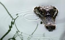 Los grandes depredadores recolonizan sus antiguos hábitats