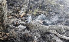 La Junta declara nivel 2 en el incendio forestal de Santa Colomba de Curueño