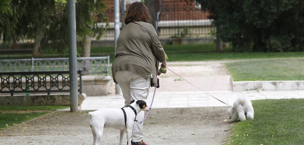 Palencia lanza una agresiva campaña contra los excrementos de los perros