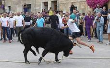 La Junta anula el 'toro enmaromado' de Astudillo del registro de espectáculos tradicionales