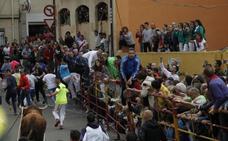 Rastreador completa el recorrido en una carrera sin incidentes en el Toro Enmaromado de Benavente