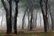Se mantienen los 11 años de cárcel para el acusado de una violación en el Pinar de Antequera de Valladolid