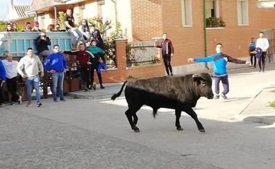 Cientos de personas asisten a Tiedra al primer Toro del Corpus