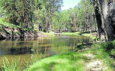 La retirada de masa arbórea aumenta la capacidad de los cauces en varios ríos segovianos