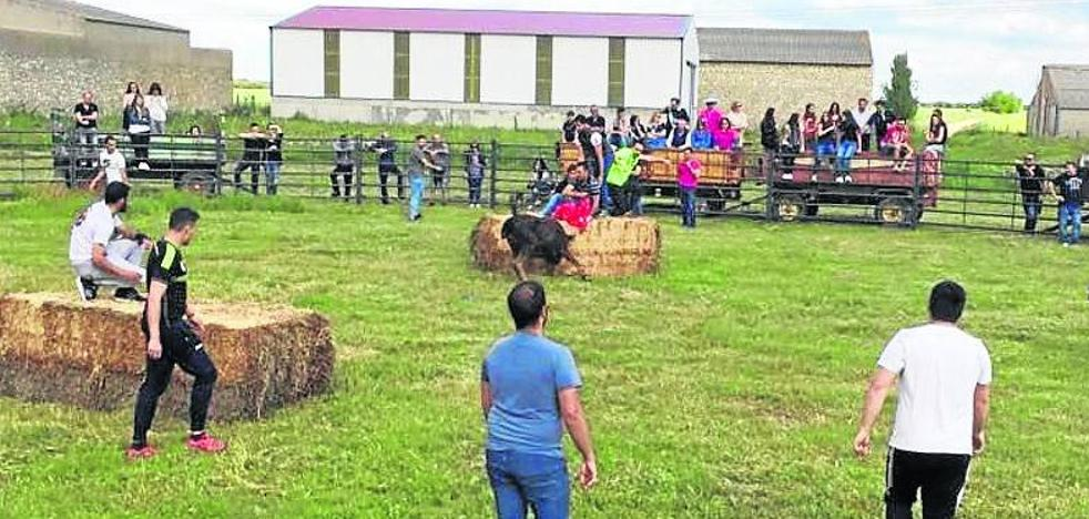 Villalba de los Alcores celebra la Virgen de Fuentes con una suelta de vaquillas