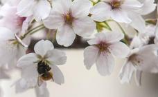 En estado crítico una mujer de 80 años por las picaduras de 2.000 abejas en Ávila