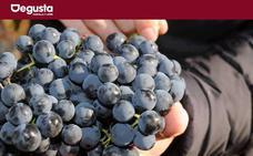 Un variado jardín vitivinícola