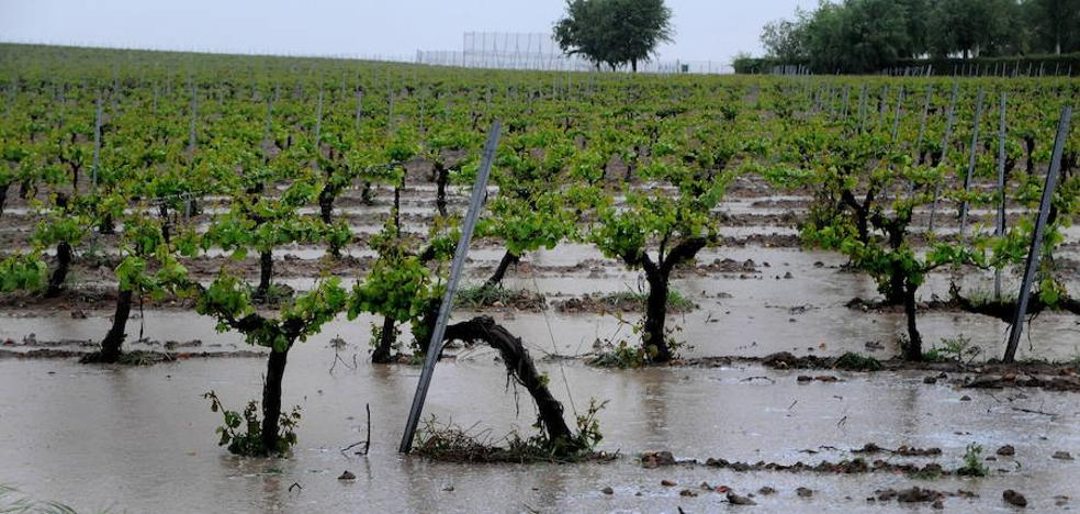 La lluvia dispara el riesgo de enfermedades por hongos en los viñedos de la comunidad