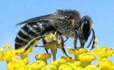 Las picaduras de abejas y avispas matan a tres personas cada verano en Castilla y León