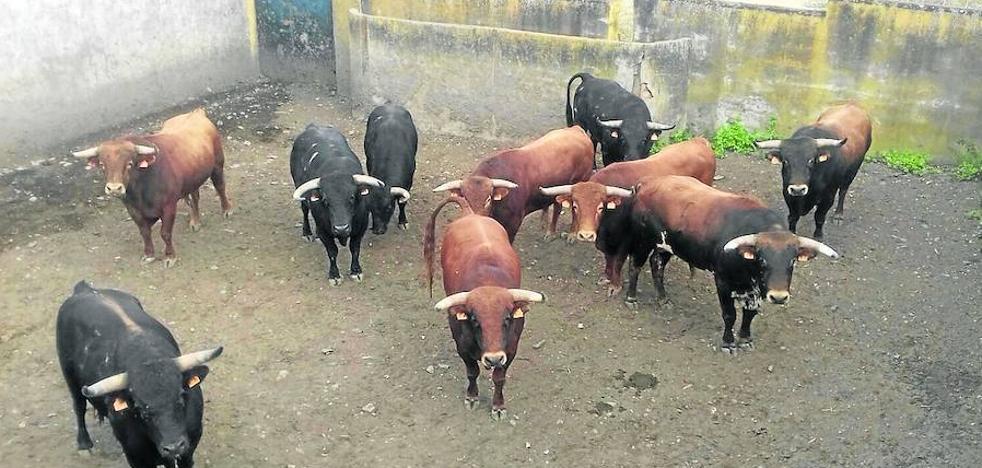 El Ayuntamiento de Fuenteguinaldo denuncia la muerte de un toro de las fiestas
