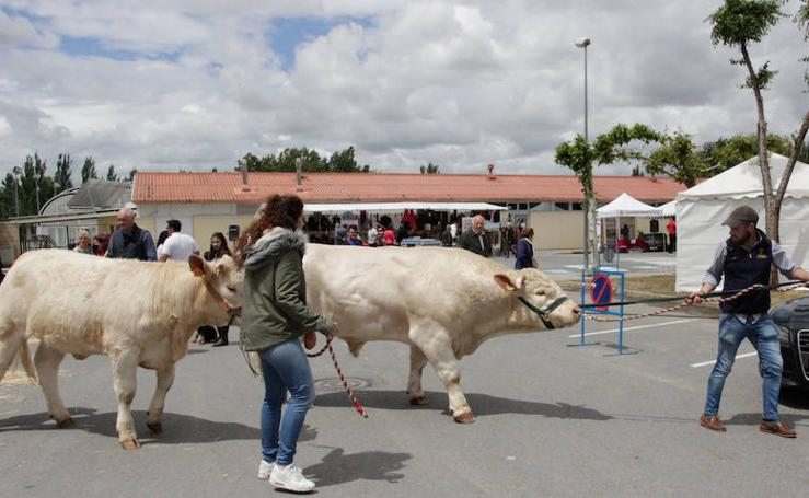 La Feria Agroganadera de Alba de Tormes cierra sus puertas con éxito