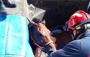 Muere una yegua en Valladolid atrapada en un foso