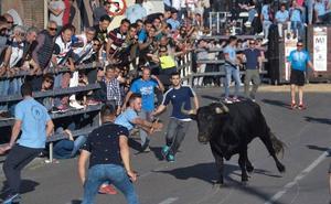 ANPBA retira la denuncia contra los 'toros del cajón' de Medina y pide disculpas al Ayuntamiento