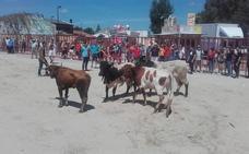 Villanueva de Duero vibra con un multitudinario 'Toro Pinariego'