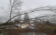 La seguridad en la carretera entre Vergaño y Rueda se mejora con el corte de acacias