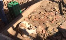 Rescatan desnutridos a 36 perros de caza en Zamora tras denuncia ciudadana