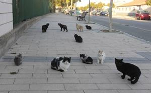 Multadas con 90 euros por dar de comer sobras a unos gatos en Valladolid