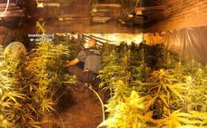 Detenidas cinco personas en La Bañeza, Sahagún y Villazala por la posesión de más de 1.000 plantas de marihuana