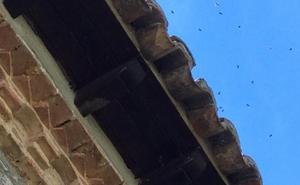 Los enjambres de abejas provocan hasta cinco salidas al día de los bomberos en Valladolid