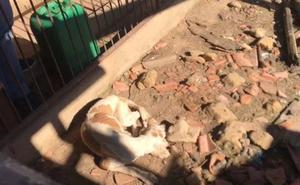 Detienen en Zamora a un hombre como presunto autor de maltrato animal