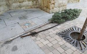 Denunciado un menor por arrancar árboles en la Calle Mayor de Palencia