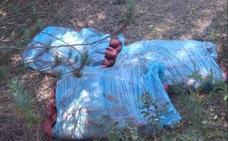 Encuentran 60 kilos de chorizo fresco en un monte de Valladolid