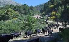 Petición al Ministerio de Agricultura para arreglar La Cañada Real que paso por Ávila