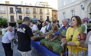 Planes imprescindibles para este fin de semana en la provincia de Palencia