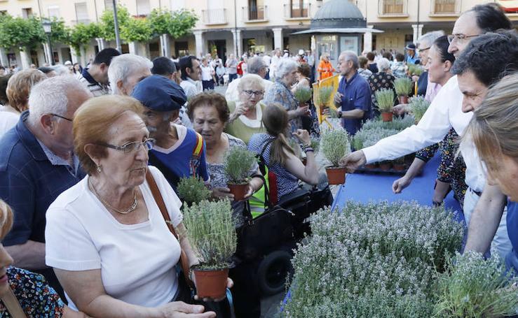 Palencia festeja a su copatrono, San Juan