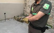 Alarma en Sepúlveda por la aparición de una culebra en la puerta de una vivienda