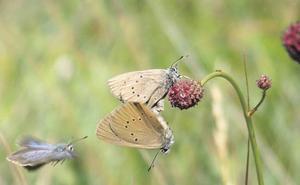 Castilla y Léon, a la cabeza en especies de mariposas de España