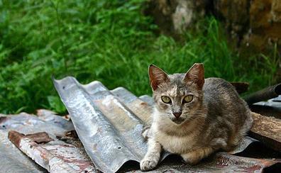 Un carné para legalizar a los 43 cuidadores de gatos callejeros en Segovia