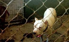 Investigan a una persona por el ataque de dos perros pitbull un hombre en Trigueros del Valle