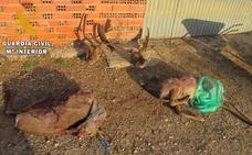 Denunciado un vecino de Magaz por cazar dos corzos y dos gamos