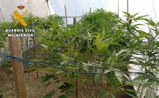 Intervenido un laboratorio clandestino de marihuana en El Tiemblo (Ávila)