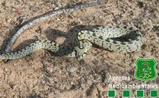¿Qué hacer si te topas con una serpiente? Lo imprescindible, no atacarla