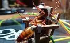 Crea una silla eléctrica para ejecutar a una cucaracha
