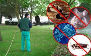 3D' Tratamientos Biosanitarios, expertos en control de plagas e higiene ambiental