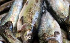 La Junta prohíbe la pesca de truchas a mano en las fiestas Toral de los Vados