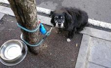 Final feliz para Boby: el perro que nunca fue abandonado