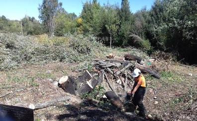 Las cuadrillas forestales prevén acondicionar unas 200 hectáreas