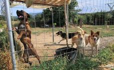 La protectora Animalejos lanza un SOS