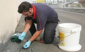Ciudadanos pide al Ayuntamiento «mayor tratamiento» contra las cucarachas en Valladolid