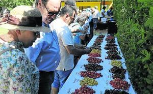 Piñel de Abajo celebra su primera feria de la cereza con medio centenar de variedades