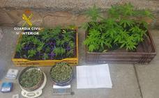 La Guardia Civil detiene a un varón de 58 años y desmantela un punto de venta de marihuana en Villadangos del Páramo