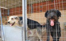 La sobreocupación y las deudas llevan a la protectora Animalejos a una situación crítica