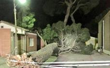 Cae un gran árbol en medio de una calle en Carpio